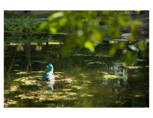 Frog Pond 12